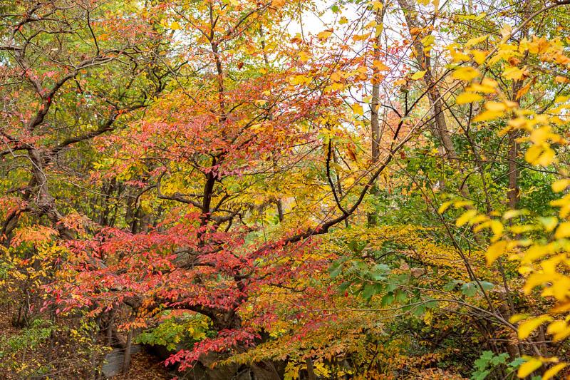 central park foliage
